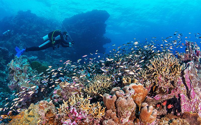 Snorkeling in Seychelles