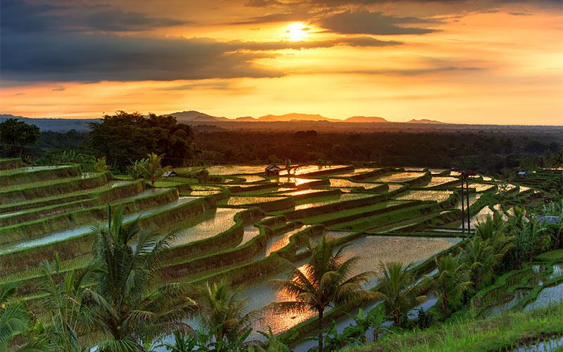 2-Famous-Jatiluwih-Rice-terraces-on-Bali