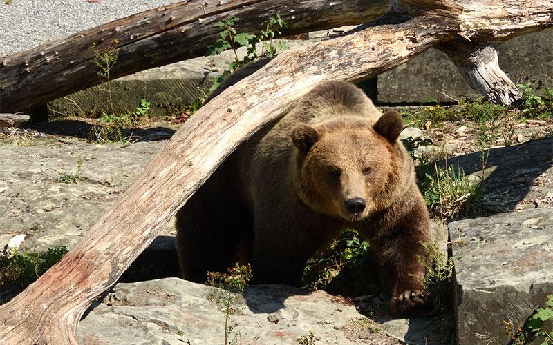 4.-Bärengraben