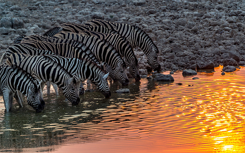 Etosha-National-Park-of-Namibia