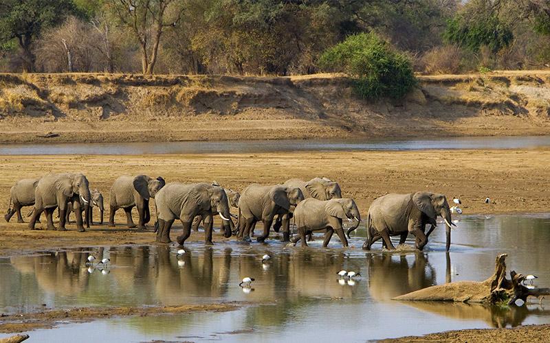 Luangwa-river-in-Zambia