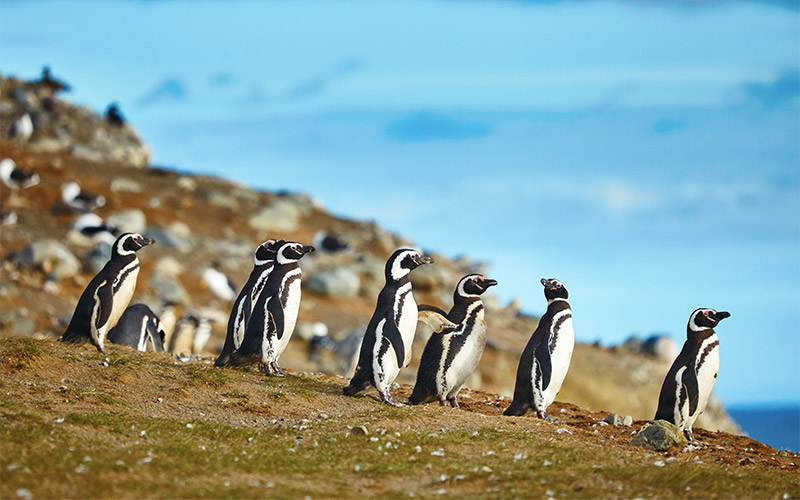 Magdalena-island-in-Patagonia